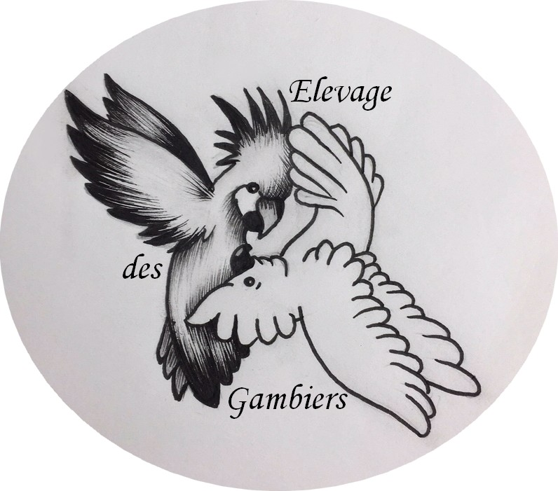Logo tatoo rond 1